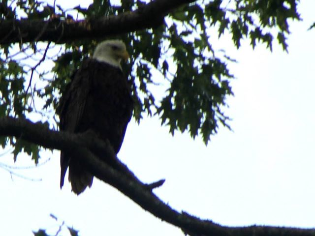 Meet the eagle that our customers see on the trip! Come see for yourself!